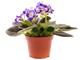 Комнатные растения в Приморском