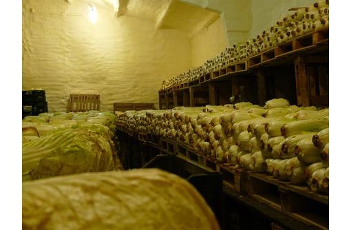 Холодильные камеры для овощей, фруктов, ягод под ключ в Саках, Евпатории и Крыму - Услуги в Саках