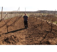 Обрезка деревьев плодовых,винограда и кустарников. - Сельхоз услуги в Крыму