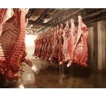 Холодильное оборудование для хранения полутуш мяса,птицы. - Продажа в Феодосии