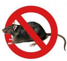 Уничтожение мышей и крыс в Симферополе и по Крыму ( дератизация ). - Клининговые услуги в Симферополе