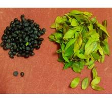 Мирт: ягода и листья + саженцы. - Саженцы, растения в Ялте