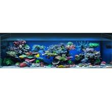 Морские аквариумы под ключ Симферополь, Севастополь, Ялта,Крым - Продажа в Севастополе