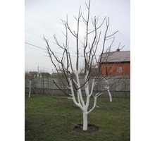 Обрезка плодовых деревьев - Сельхоз услуги в Симферополе