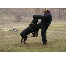 Школа охранных собак Арес-Крым Мы научим  Вашу собаку защищать Вас и охранять Ваш дом.. - Дрессировка, передержка в Севастополе