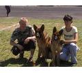 Питомник немецких овчарок - Собаки в Симферополе