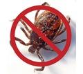 Уничтожение насекомых и грызунов в Севастополе - ООО «Трифон» качество, результат, доступные цены! - Клининговые услуги в Севастополе