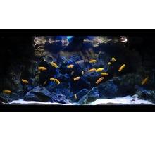 Чистка аквариумов Симферополь,Севастополь, Ялта, Аушта - Продажа в Симферополе