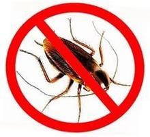 Дезинсекция. Полное выведение тараканов, блох, грызунов, плесени и др. - Клининговые услуги в Севастополе