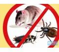 Уничтожение тараканов, блох, клопов, плесени до полного выведения - Услуги по недвижимости в Севастополе