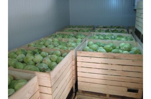 Холодильные камеры для капусты, овощехранилища. Холодильное оборудование. Проектирование. Монтаж, фото — «Реклама Джанкоя»