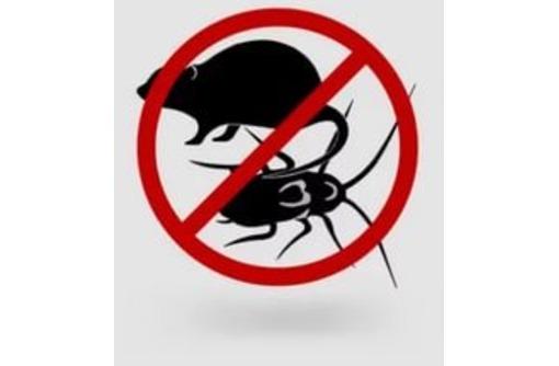Уничтожение тараканов , грызунов и прочих вредителей в жилых и не жилых помещений - Клининговые услуги в Севастополе