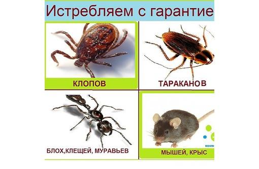 Качественное уничтожение клопов, тараканов, грызунов, блох, плесени и не приятного запаха. - Клининговые услуги в Севастополе