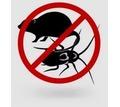 Уничтожение тараканов, уничтожение клопов, крыс, услуги дезинфекции - Клининговые услуги в Севастополе