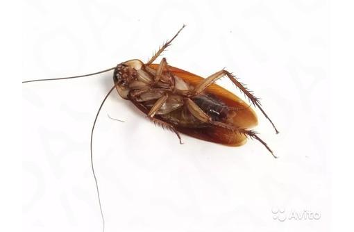 Уничтожение тараканов , грызунов, клопов - Клининговые услуги в Севастополе