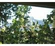 Сдаю свой домик с беседкой в 10 мин. от пляжа!Посуточно., фото — «Реклама Алупки»