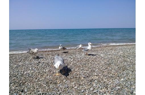 Отдых в Крыму, у самого моря. Береговое (Бахч. р-н) в 30 мин от Севастополя - Отдых, туризм в Севастополе