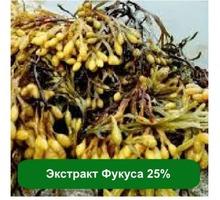 Оптом и розницу Экстракт Фукуса 25%, 1 кг - Косметика, парфюмерия в Алупке