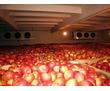 Холодильное Оборудование для Овощехранилища. Установка, Гарантия., фото — «Реклама Бахчисарая»