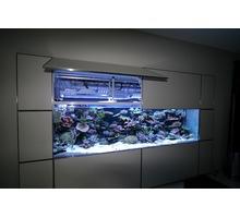 Пресноводные аквариумы на заказ Симферополь, Ялта, Севастополь, Крым - Аквариумные рыбки в Севастополе