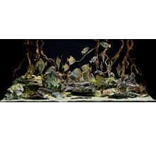 Чистка и обслуживание аквариумов Симферополь,Севастополь, Ялта, Алушта, Евпатория, Крым - Продажа в Севастополе