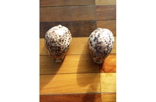 ;  Ракушка Cypraea tigris -Ципрея Тигрис, фото — «Реклама Бахчисарая»