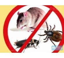 Профессиональное выведение грызунов (крыс, мышей) - Клининговые услуги в Севастополе