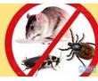 Профессиональное выведение грызунов (крыс, мышей), фото — «Реклама Севастополя»