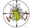 Избавиться от тараканов за 2 часа. Гарантия, фото — «Реклама Севастополя»