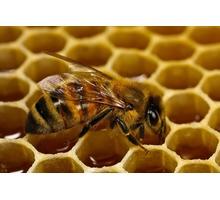 Пчеломатки Карпатка Карника Июнь 500 - Пчеловодство в Бахчисарае