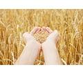 Уничтожение вредителей хлебных запасов, фумигация фосфином и аэрозольно-газовая дезинсекция в Крыму - Сельхоз услуги в Джанкое