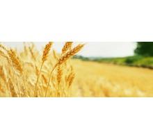 Защита зерна и зерновых продуктов от вредителей, фумигация и влажная дезинсекция - Сельхоз услуги в Евпатории