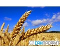 Фумигация зерна фосфином - Сельхоз услуги в Симферополе