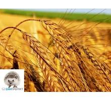 Борьба с вредителями хлебных запасов - Сельхоз услуги в Джанкое