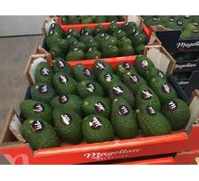 Продаем авокадо из Испании - Продукты питания в Ялте
