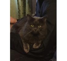 Вязка с любвеобильным котом,от которого получаются красивые котята. - Вязка в Севастополе