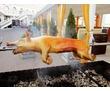 МЯСО НА ВЕРТЕЛЕ.ПЛОВ. Севастополь.Крым., фото — «Реклама Севастополя»