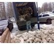 Вывоз мусора,спуск,разнорабочие на стройку., фото — «Реклама Севастополя»
