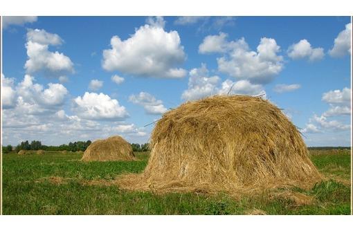 Саженцы, доставка сена, спил деревьев, вывоз, патрулирование садов - Сельхоз услуги в Севастополе