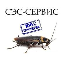 Уничтожение комаров,блох,клещей, тараканов и других насекомых, а так же грызунов! Эффект 100%! - Клининговые услуги в Бахчисарае