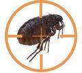 Уничтожение тараканов , клопов, комаров, клещей и других насекомых!Истребление грызунов!Эффект 100%! - Клининговые услуги в Алуште