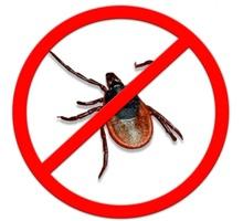 Обработка от комаров, клещей, тараканов и других насекомых! Эффект 100%! - Клининговые услуги в Белогорске