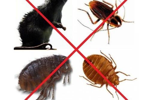 Обработка от комаров, клещей, тараканов, клопов и других насекомых и грызунов! Эффект 100%! - Клининговые услуги в Партените