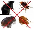Обработка от комаров, клещей, тараканов, клопов и других насекомых и грызунов! Эффект 100%! - Клининговые услуги в Крыму