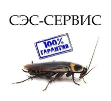 Истребление комаров, клещей, тараканов, клопов и других насекомых, а так же грызунов! Эффект 100%! - Клининговые услуги в Приморском
