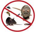 Уничтожение тараканов,клопов, комаров, мух, клещей и других насекомых!Борьба с грызунами!Эффект 100% - Клининговые услуги в Саках