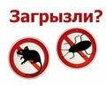 Истребление любых популяций насекомых! Уничтожение крыс и мышей! Эффект 100%! Гарантии! Звоните! - Клининговые услуги в Крыму