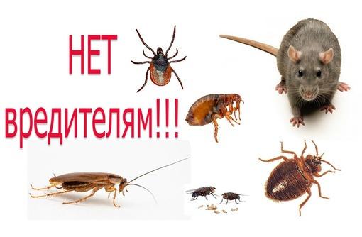 Уничтожение тараканов , клопов и других насекомых! Истребление грызунов! Эффект 100%! Звоните! - Клининговые услуги в Форосе