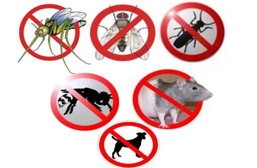 Истребление грызунов и насекомых! Борьба с плесенью, грибком и другими микроорганизмами. Эффект 100% - Клининговые услуги в Севастополе