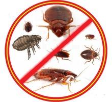Истребление насекомых, грызунов и плесени! Антимикробная обработка! Эффект 100%! Жмите! - Клининговые услуги в Симферополе